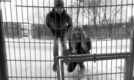 Polska fundacja wykorzystuje wideo 360° do promocji adopcji zwierząt